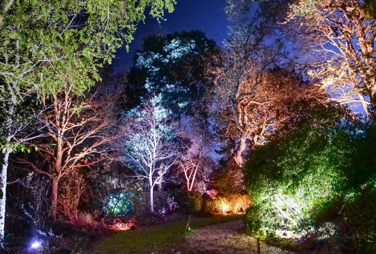 Trelissick Illuminations for Christmas