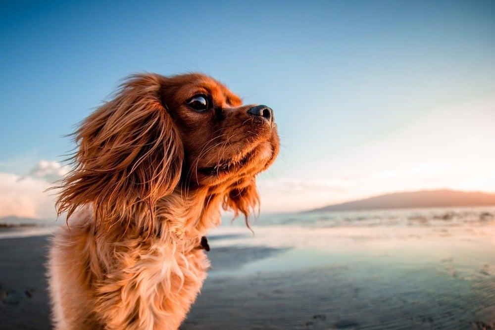 Dog enjoying the beach in Cornwall