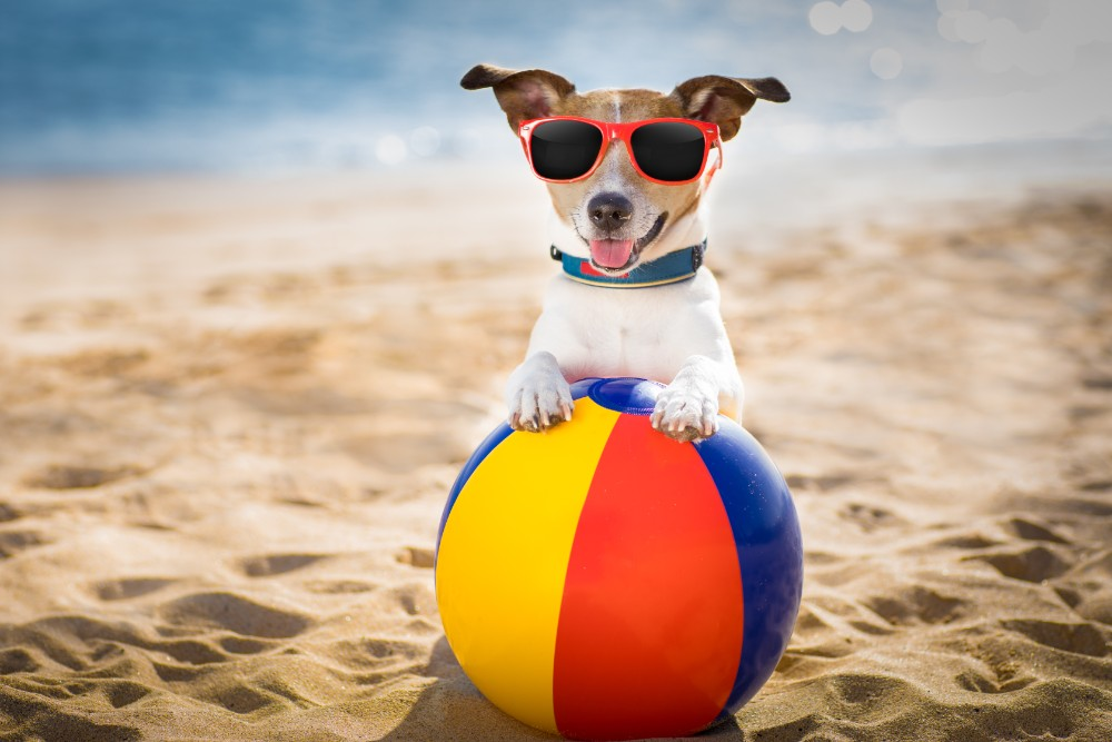 Dog holidays in Cornwall