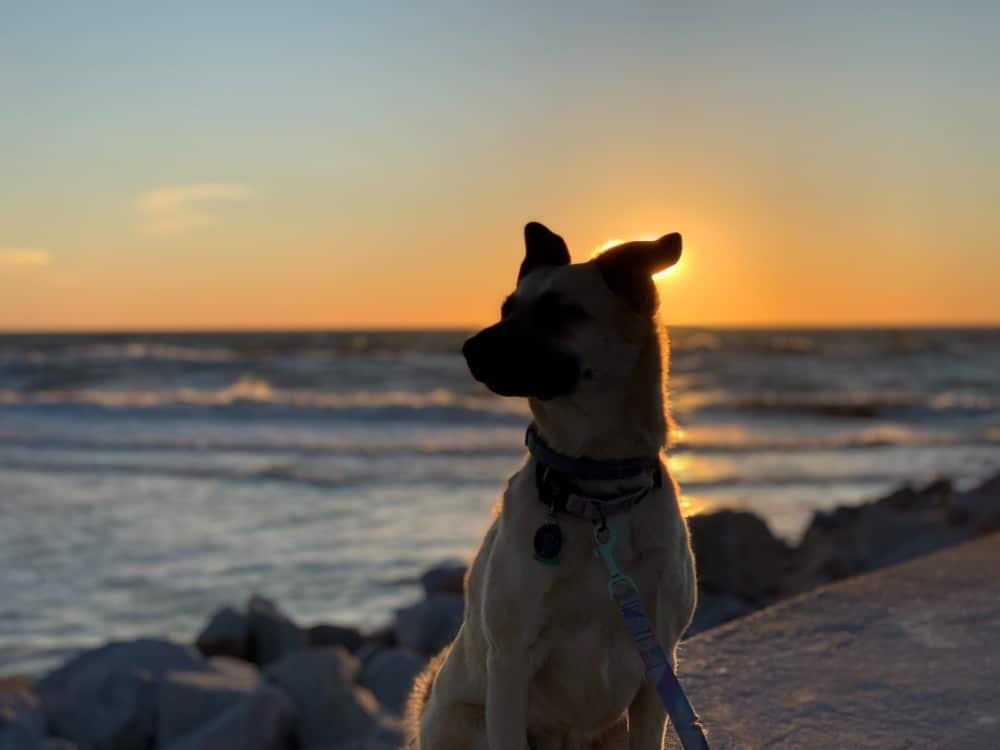 dog on beach at sunset