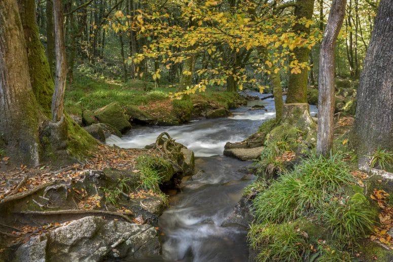 Autumn walk near Golitha Falls in Cornwall