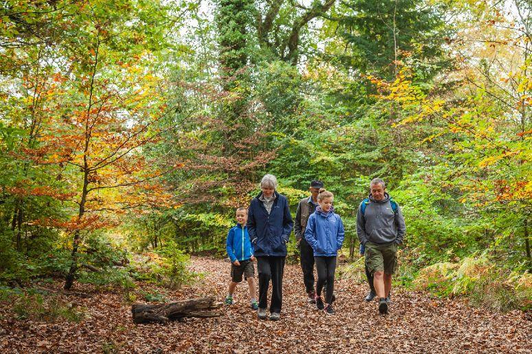 Autumn walking in Cardinham Woods in Cornwall