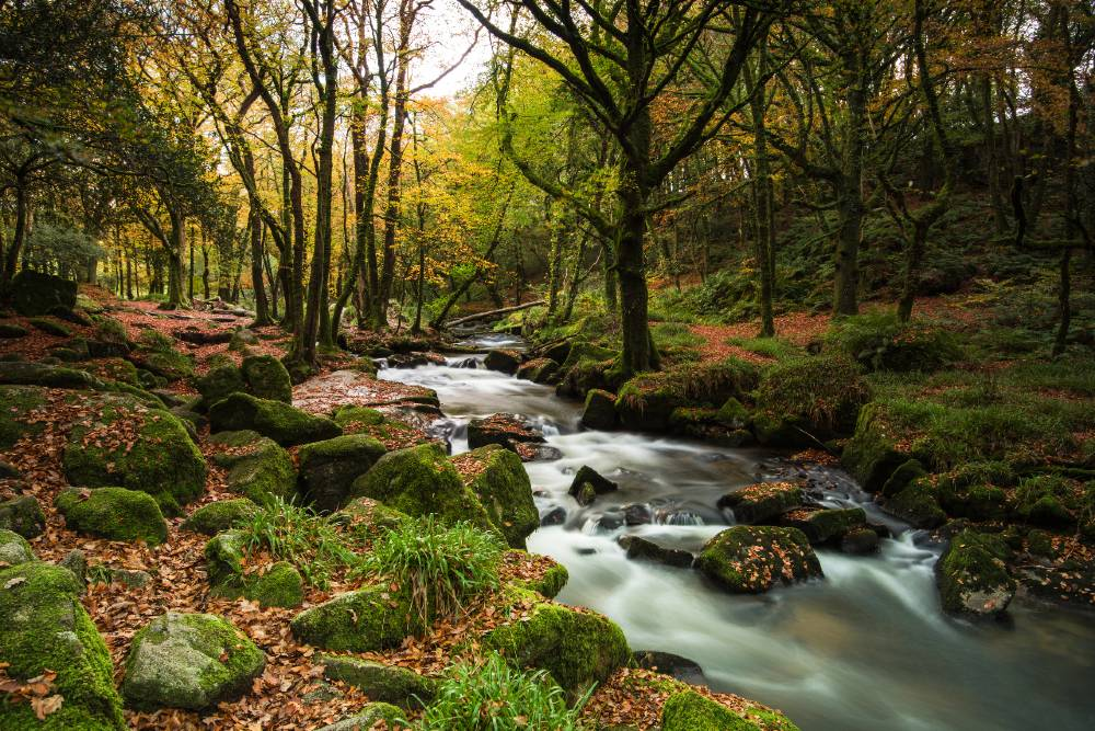 Autumn in the woods in Cornwall